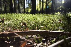 Forest Ground Fotografia Stock Libera da Diritti