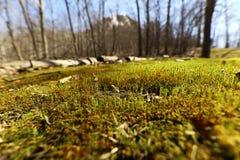 Forest Ground Fotos de archivo libres de regalías