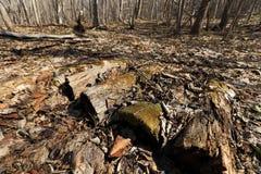 Forest Ground Imagen de archivo