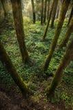 Forest Ground Fotografia Stock