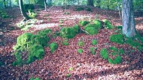 Forest Ground Royaltyfri Bild