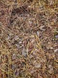 Forest ground in auromn time. Forest ground auromn time brown royalty free stock photo