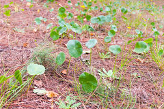 Forest Ground Closeup. Nature Detail stock photography