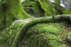 Forest Ground cubierto de musgo Imagenes de archivo