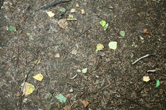 Forest ground. Full of leafs royalty free stock photography