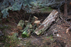 Forest Ground Hole with Tree Cut to Logs Stock Images
