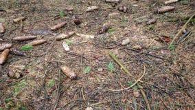 Forest Ground video estoque