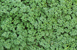 Forest ground plants Stock Photo