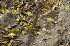 Forest ground after rain. Stock Photography