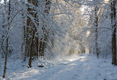 Forest ground road snow covered Stock Images