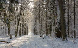 Forest ground road snow covered Stock Photography