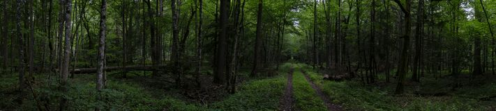 Forest ground road in sumer panorama. In cloudy weather midday, Bialowieza forest, Poland, Europe stock photos