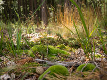 Forest ground shot, Czech republic. Forest ground with green moss and grass Stock Photos