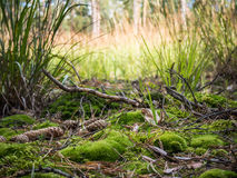 Forest ground shot, Czech republic. Forest ground with green moss and grass Royalty Free Stock Photos
