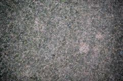 Forest ground texture with moss. background. Royalty Free Stock Images