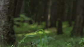 Forest Ground Vegetation stock footage