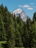 Forest: Group of Green Firs in Summer Time and Peak of Italian Dolomites Alps in Background Stock Image