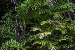 Forest growth trees,nature green trees rainforest for background.  stock images