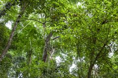 Forest growth trees,nature green trees rainforest for background and design.  stock image