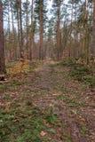Forest Grunewald an einem Wintertag Lizenzfreie Stockfotos