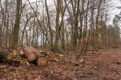 Forest Grunewald on a winter day Royalty Free Stock Photos