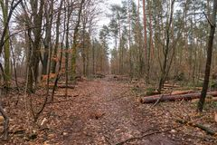 Forest Grunewald on a winter day Royalty Free Stock Photography