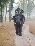 A forest guard patrolling the park on elephant back. A forest guard scanning the park during his patrolling round in Bandhavgarh National Park in Madhya Pradesh stock photography