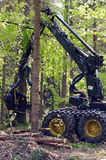 Forest harvester in action. Heavy forestry vehicle employed in cut-to-length logging operations for felling, delimbing and bucking trees Royalty Free Stock Photos
