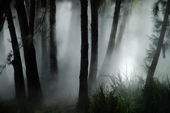 Forest haze. White thick mist in dark forest, photo taken in canberra, australia Stock Photography