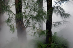 Forest Haze. And mist through large trees in Canberra Stock Photos