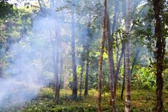 Forest Haze. In the rainforest Royalty Free Stock Photo