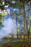 Forest Haze. In the rainforest Stock Images