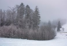 Forest in haze with trees in hoarfrost Royalty Free Stock Photo