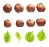Forest hazelnuts isolated Royalty Free Stock Image