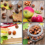 Forest hazelnuts in shell Stock Photography