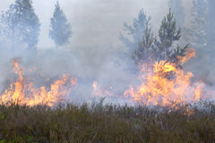 Forest and heath in fire. Appropriate to visualize wildfires or prescribed burning Stock Image