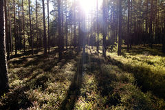 Forest and heathland Stock Photo