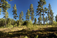 Forest and heathland Stock Photos
