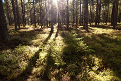 Forest and heathland Stock Photography
