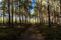 Forest and heathland Royalty Free Stock Photos