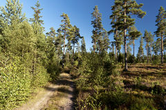 Forest and heathland Royalty Free Stock Image