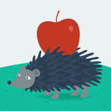 Forest hedgehog carries apple Stock Photos