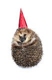 Forest hedgehog in a festive cap isolated Royalty Free Stock Photos