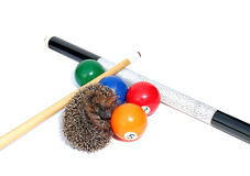 Forest hedgehog isolated Royalty Free Stock Images