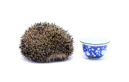 Forest hedgehog with saucer of milk Stock Photo