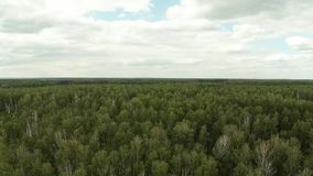 Forest on the height of bird flight. Aerial footage. Royalty Free Stock Photos