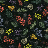 Forest herbs. Dark background Stock Image