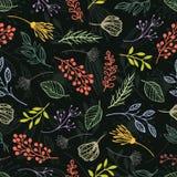 Forest herbs. Dark background Stock Photos