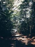 Forest Hideway Imagem de Stock Royalty Free