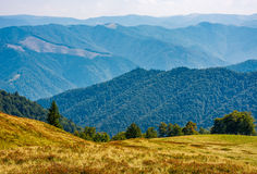Forest on high altitude grassy hillside. Beautiful landscape with ridge in a distance on a bright autumn day Royalty Free Stock Images